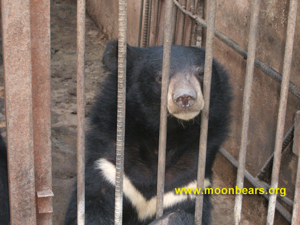 korea farm bear photo