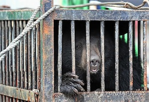 Cruel protests by Korean bear farmers